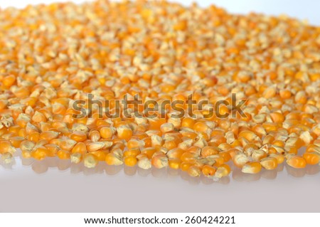 Heap of Dried corn used for making popcorn arranged as the background - stock photo