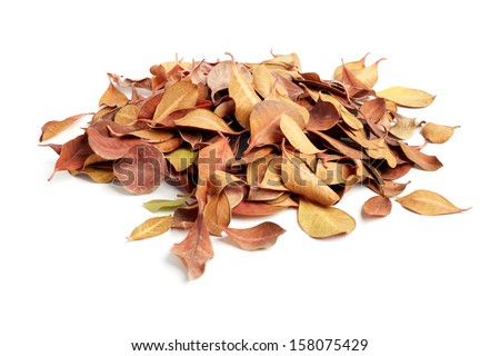 heap of dry leaves. isolated on white background - stock photo