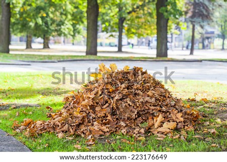 Heap of dry oak leaves in autumn time - stock photo