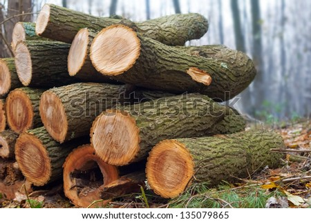heap of firewood in a misty forest - stock photo
