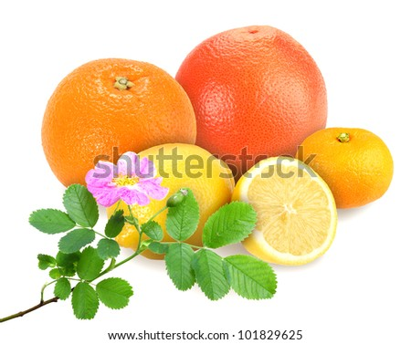 Heap of fresh citrus fruits with branch of dog-rose. Placed on white background. Close-up. Studio photography. - stock photo