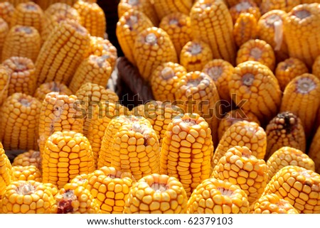 Heap of fresh harvested corn, selective focus - stock photo