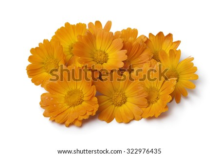 Heap of  fresh orange pot marigold flowers on white background