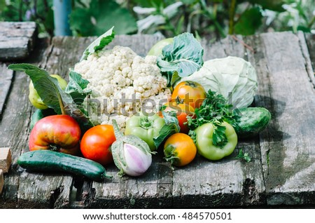 Heap of fresh vegetables on wooden table in the garden