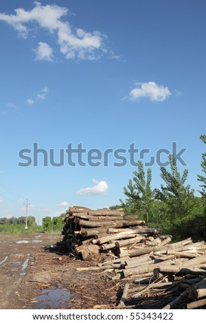 Heap of freshly sawed wood  in spring forest