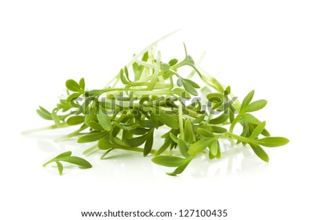 Heap of garden cress on white background - stock photo