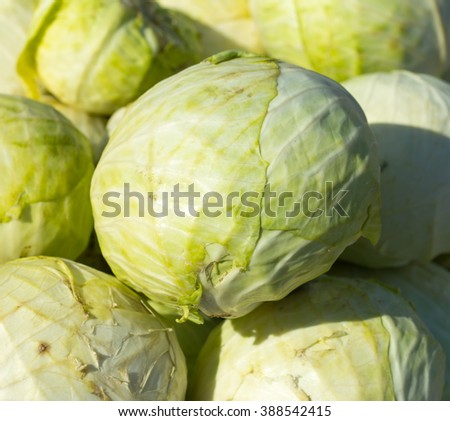 Heap of green cabbage