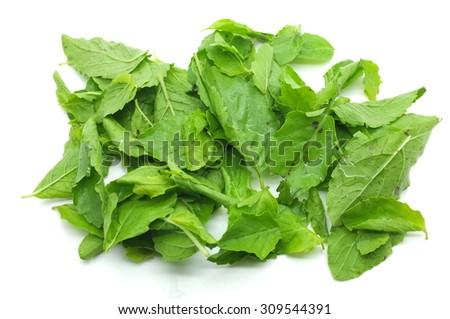 Heap of green fresh basil leaves - stock photo