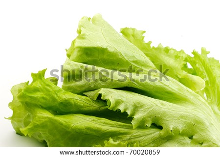 heap of green salad - stock photo