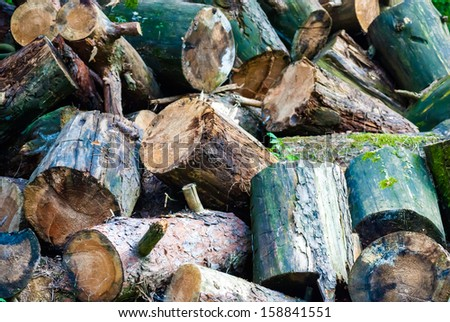 heap of logs with moss in the green forest