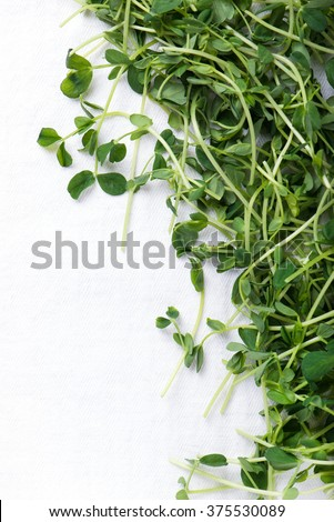 heap of organic and freshly harvested snow pea shoots or sprouts, over white kitchen cloth with copy space, top view, vertical - stock photo