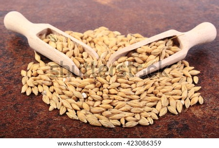 Heap of organic whole barley grain with wooden spoon