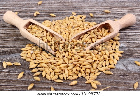 Heap of organic whole barley grain with wooden spoon lying on wooden background, healthy nutrition