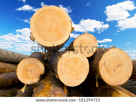 Heap of pine logs on the sky background. - stock photo