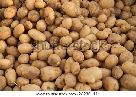 Heap of potatoes after harvest - stock photo