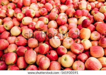 Heap of red Gala apples after harvesting. - stock photo