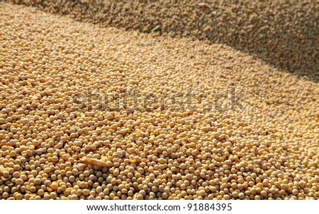 Heap of soy after harvesting, selective focus - stock photo