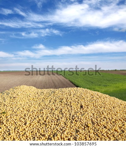 Heap of soy bean after harvest and field - stock photo