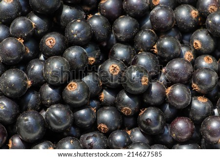 Heap of the black currant - stock photo