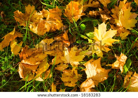 Heap of the fallen leaves from trees - stock photo