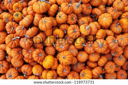 heap of tiny pumpkins - stock photo