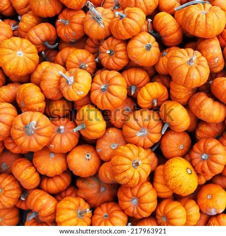 Heap of tiny pumpkins. Background - stock photo