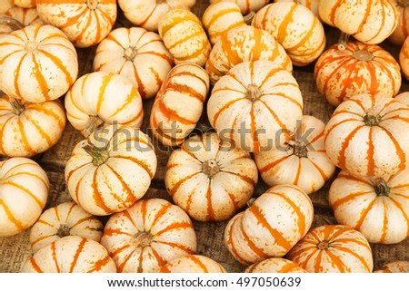 Heap of tiny striped pumpkins. Background. Harvest