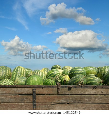 Heap of watermelon at farmers market over  blue sky - stock photo