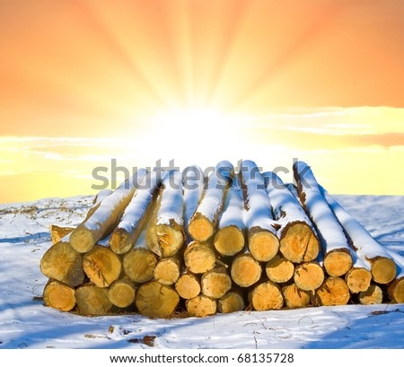 heap of wooden logs on a sunset background - stock photo