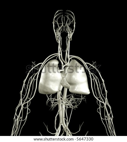 Heart and Lung X-ray - stock photo