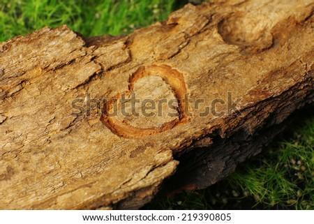 Heart carved in tree bark - stock photo