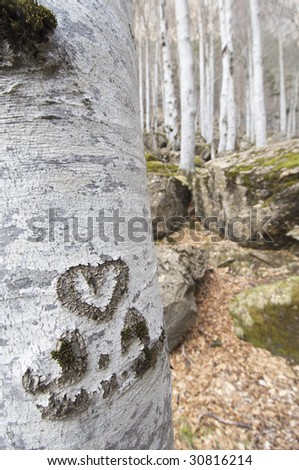 heart engraved in a beech