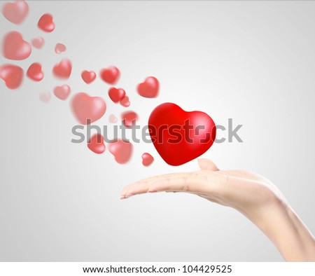 Heart in the hands isolated - stock photo