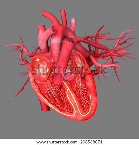 Heart intersection - stock photo