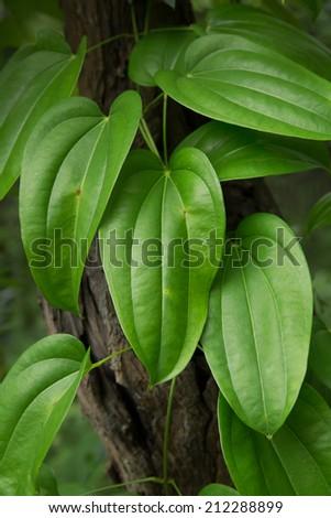 Heart leafs. - stock photo