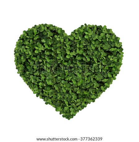 heart made of clover Isolated on White Background - stock photo