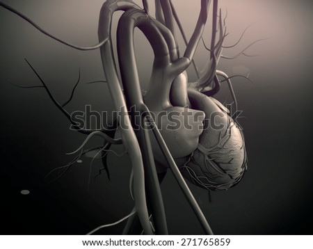 Heart model, Human heart model, Full clipping path included, Human heart for medical study, Human Heart Anatomy - stock photo