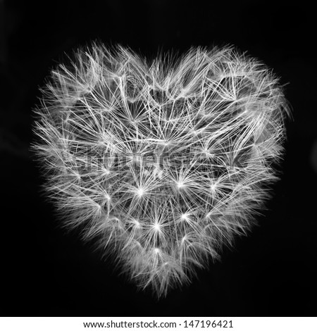 heart of a dandelion, the day of St. Valentine love - stock photo