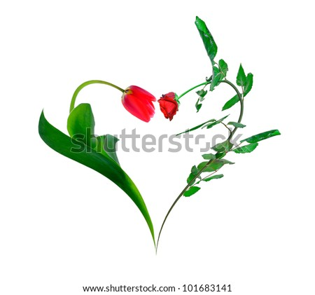 Heart of a tulip and rose isolated on white background - stock photo