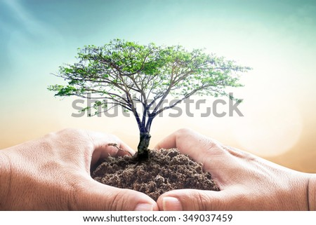 Heart of hand holding big green plant with soil on blur abstract beautiful sea, ocean, forest, desert on colorful sunset background. Ecology World Environment Day Investment Health Care Spring concept - stock photo