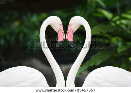 Heart of pink flamingos - stock photo