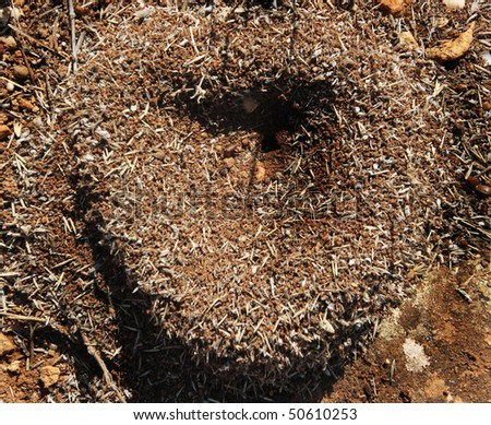 heart of the anthill in sunny day, to the day of Sainted Valentine - stock photo