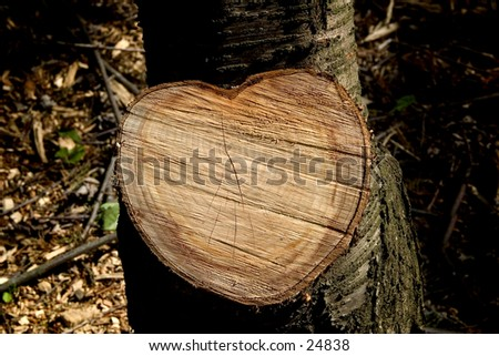 Heart of wood. Newly chopped tree in the shape of a heart. Great for a St Valentine's message, or carved initials.