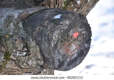 Heart on a tree - stock photo