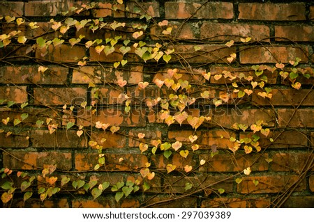 heart shape leaf with brick wall