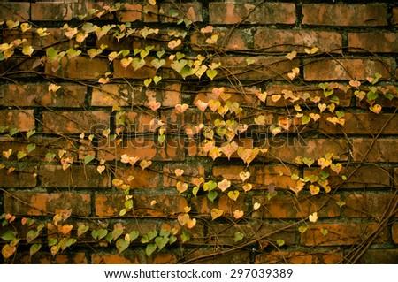 heart shape leaf with brick wall - stock photo