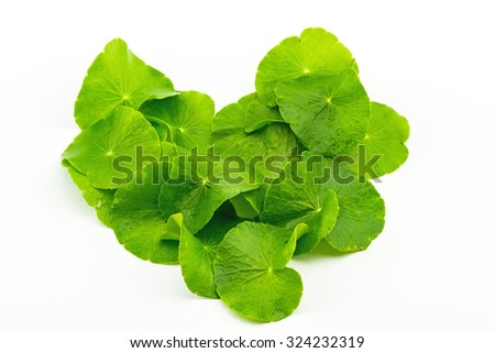 Heart shape of Green Asiatic Pennywort leaf (Centella asiatica ) on white background - stock photo