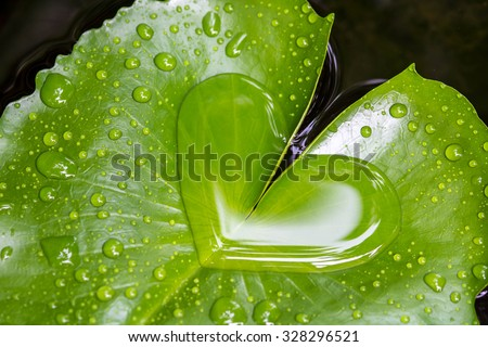 Heart shape water on lotus leaf