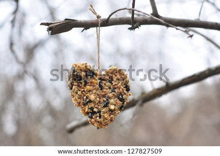 Heart-shaped bird feeder - stock photo