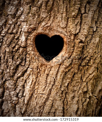 Heart-shaped bird nest in hollow tree trunk - stock photo